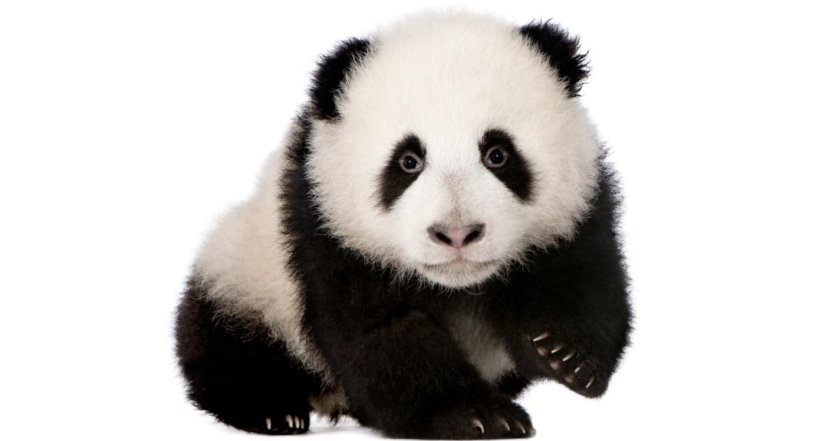 Pandapunten kwijtraken of sparen wat vooral niet te doen for Zuinig leven en sparen
