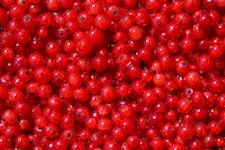 Rode bessen als metafoor voor het grote aantal eicellen