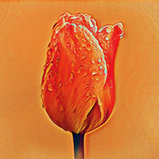 Vagina: Het Wonder Daaronder